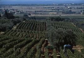Ornellaia e Masseto