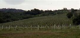 Colli Irpini - Montesole